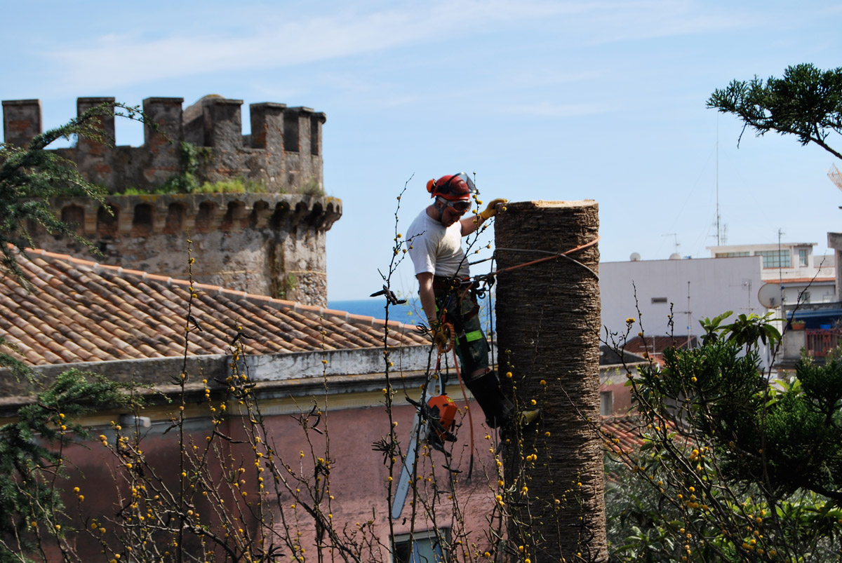 Potatura e abbattimento palme in treeclimbing
