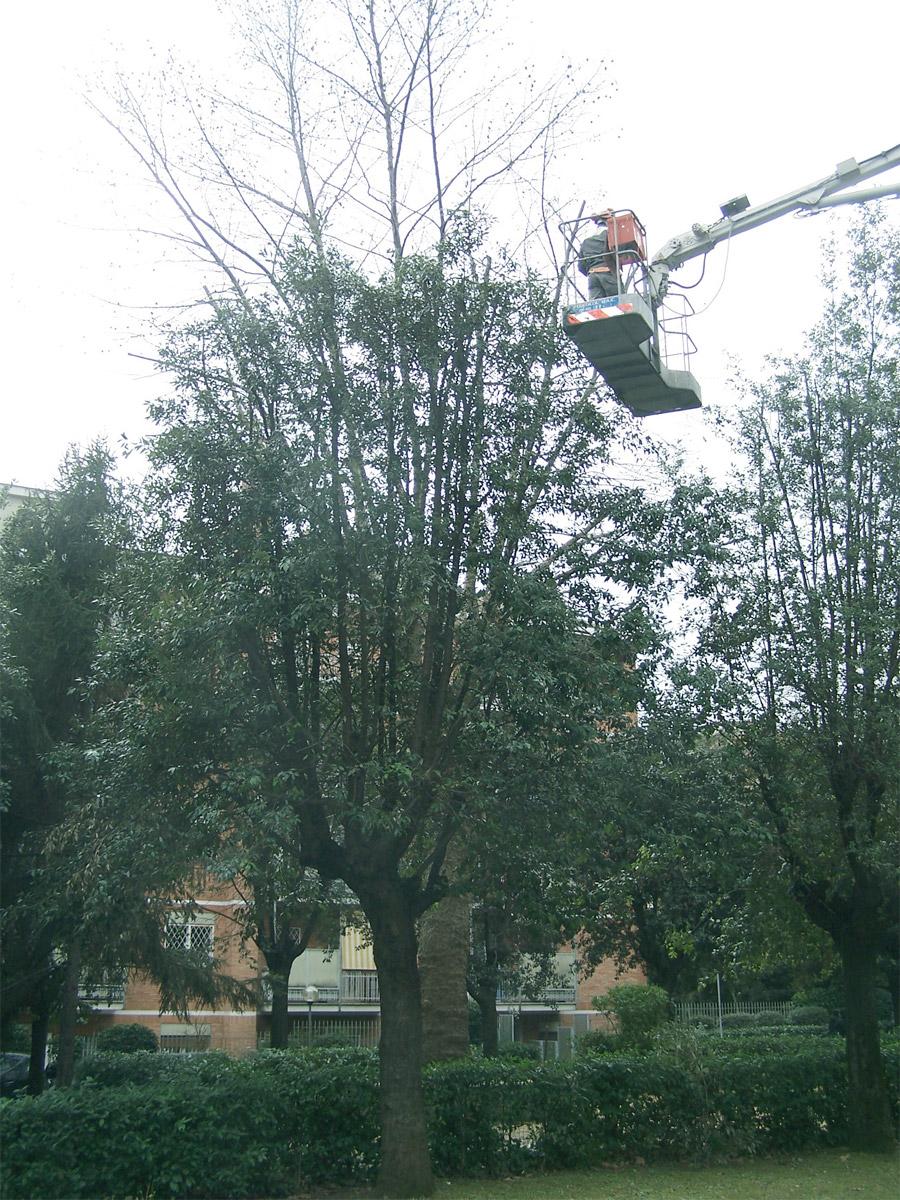 Potatura e abbattimento alberi