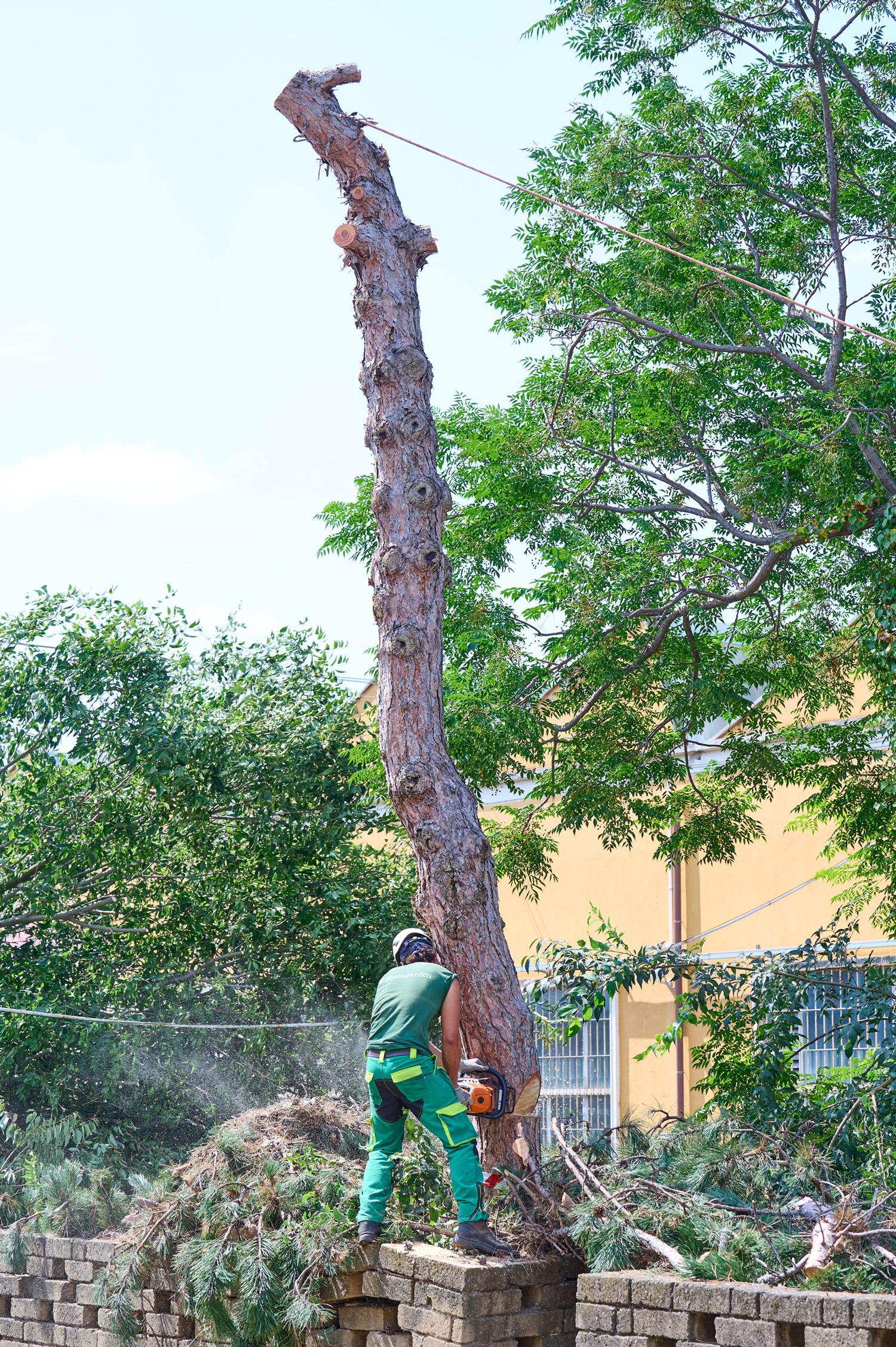 Potatura e abbattimento alberi ad alto fusto