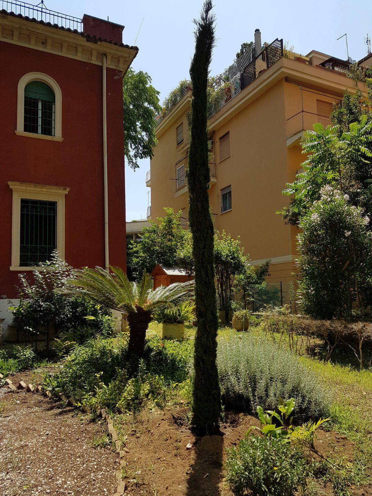 Fornitura piante palme