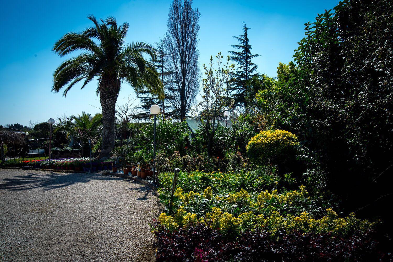 Fornitura piante