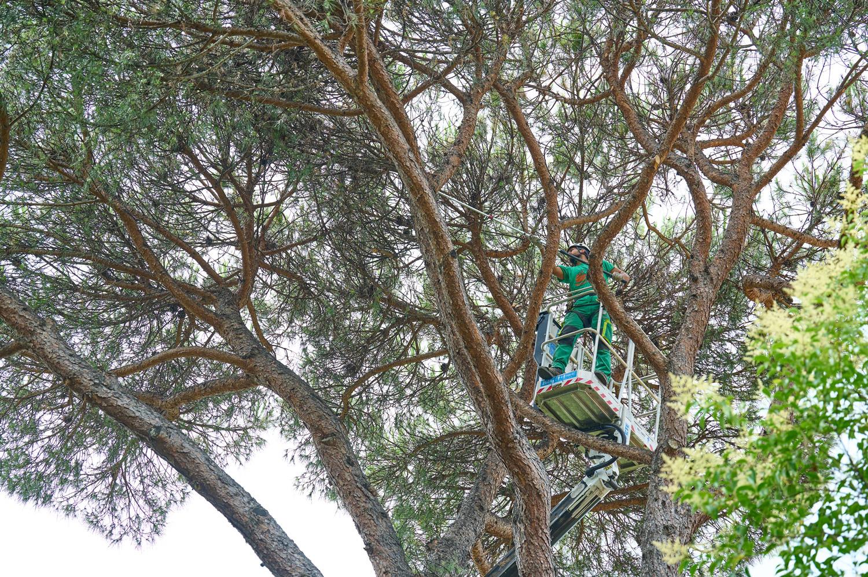 Potatura alberi ad alto fusto