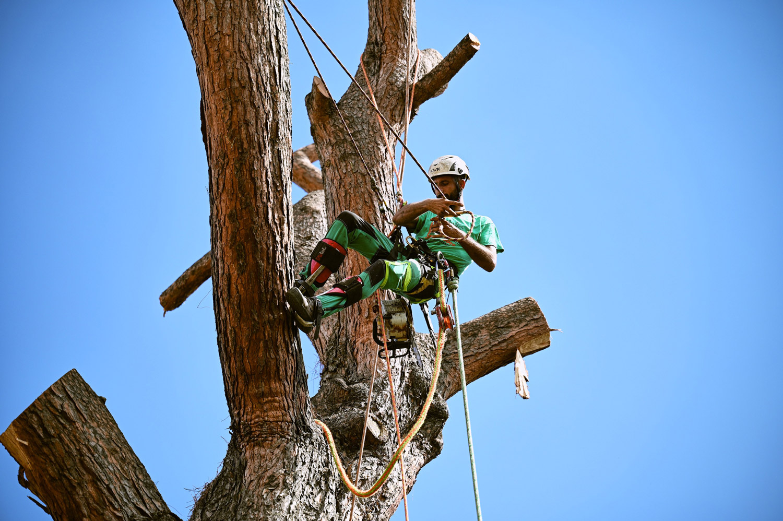 Potatura e abbattimento alberi in treeclimbing